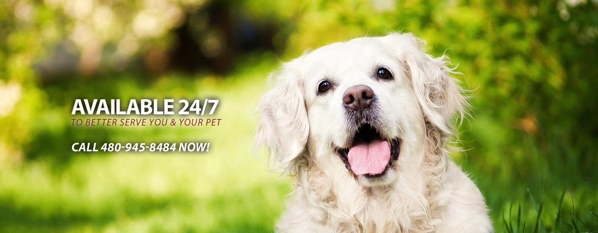 24 Hour Scottsdale Veterinary Service